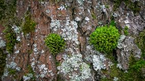 Green moss on the old tree in spring forest stock photos