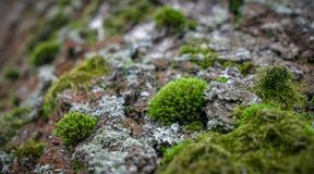 Green moss on the old tree in spring forest. stock photos