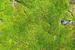 Green moss. Stock Image