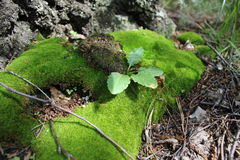Green moss on old wood 20322 Stock Photos