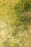 Green moss on the old wooden background Royalty Free Stock Images