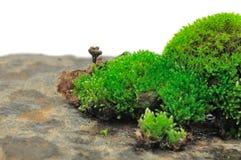 Green Moss On Stone Royalty Free Stock Photos