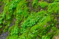 Green Moss On Wet Stone In Rainforest