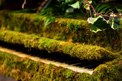 Green moss piano Stock Image
