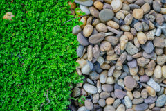 Green moss and rock. Stock Photo