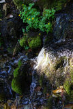 Green moss on rock in alpine stream Royalty Free Stock Images