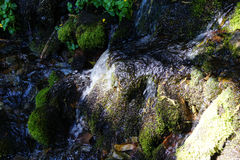 Green moss on rock in alpine stream Royalty Free Stock Photos