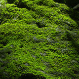 Green Moss on the rock Royalty Free Stock Image