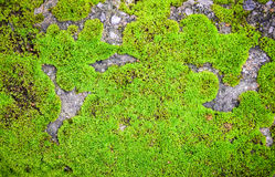 Green Moss on rock. Moss, green, natural, grow, leaf, grass, texture, growth, plant, background, fresh, nature, environment, detail, pattern Stock Image