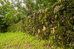 Green moss on rock wall Royalty Free Stock Images