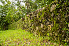 Green moss on rock wall Royalty Free Stock Photos