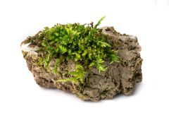 Moss and rock. Green Moss and rock on white background isolated Royalty Free Stock Image