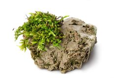 Moss and rock on white background isolated. Green Moss and rock on white background isolated Stock Photos