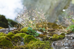 Green moss on rocks Stock Photography