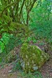 Green moss on the rocks Royalty Free Stock Photo