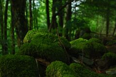Green Moss on Rocks in Forest Royalty Free Stock Image
