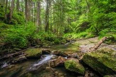 Green moss on rocks near a stream Stock Photos