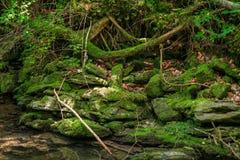 Green moss on rocks near a stream Stock Image