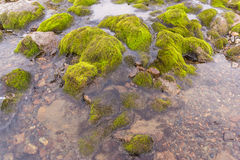Green moss on the rocks Stock Images