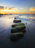 Green moss on rocks at sunset Stock Photos