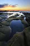 Green moss on rocks at sunset Royalty Free Stock Images