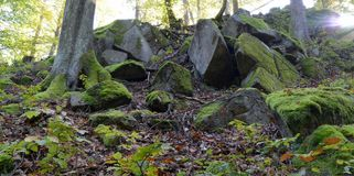 Green moss on rocks and trees in the woods Royalty Free Stock Photo