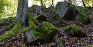 Green moss on rocks and trees in the woods Stock Photo