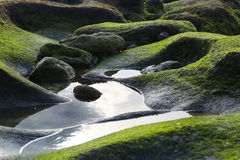 Green moss on the rocky beach Stock Images