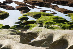 Green moss on the rocky beach Stock Image
