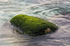 Green moss sea rock Royalty Free Stock Image