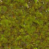 Moss Seamless Texture. Royalty Free Stock Photography