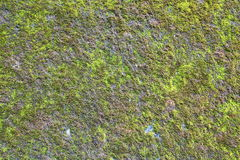 Green Moss Stock Image