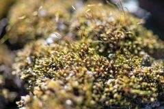 Green moss with small sprouts of weeds in the garden. Horizontal photography royalty free stock image