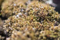 Green moss with small sprouts of weeds in the garden. Horizontal photography royalty free stock photography