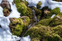 Green moss and snow Stock Image