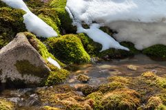 Green moss and snow Royalty Free Stock Image