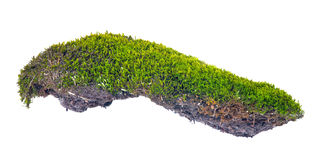 Green moss with soil on white Royalty Free Stock Photo