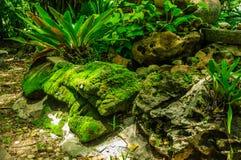 Green moss on the stone with Asplenium nidus plant. Stock Photo