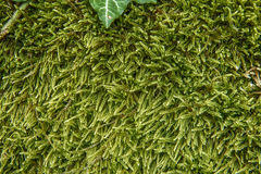 Green moss on the stone Stock Photo