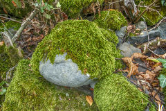 Green moss on the stone Royalty Free Stock Images