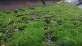 Green moss. A stone fence with green moss on it. Picture taken with phone on a rainy day Royalty Free Stock Photography