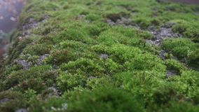 Green moss. A stone fence with green moss on it. Picture taken with phone on a rainy day Royalty Free Stock Photos