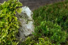 Green moss and stone in the forest. Green moss and stone in the green forest Stock Images