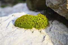 Green moss on a stone Stock Photography