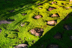 Green moss on stone. Natural green moss in rough stones in sunlight effect, selective focus royalty free stock photo