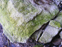 Green moss on the stone. Green moss on old stone Stock Images