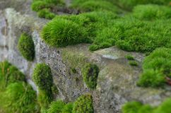 Green moss on stone Royalty Free Stock Photos