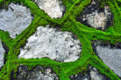 Moss on the wall. Green moss on the stone wall Stock Images