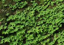 Green moss. On stone wall Stock Photo