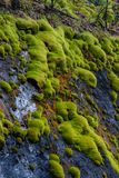 Green moss on stones in the forest near the Talc quarry stone in the Sverdlovsk region stock image